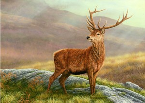 Robert E Fuller - red stag- print